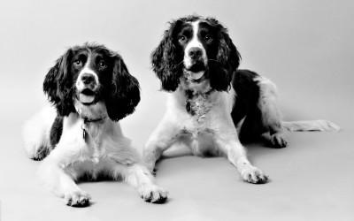 dog-portraits-two